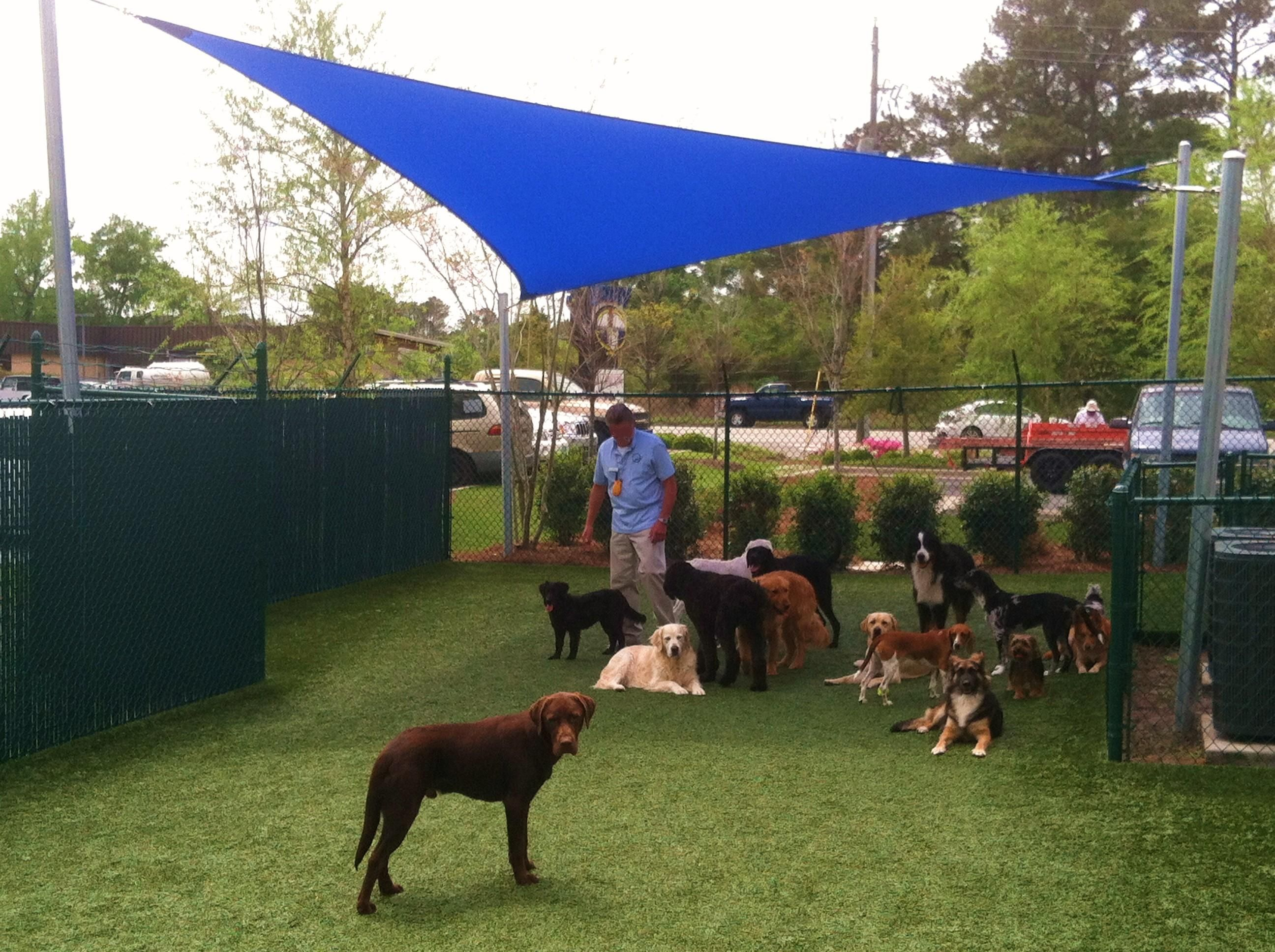 Dogs Love Shade A Kiwishade At A Doggie Day Care In Wilmington