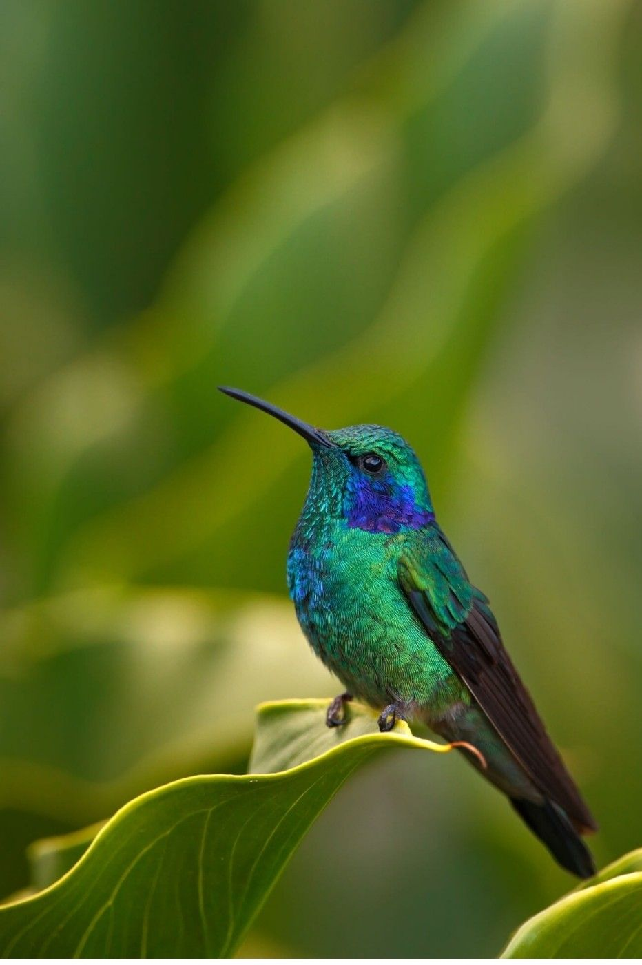 hummingbird Hummingbird habitat, Hummingbird plants, How