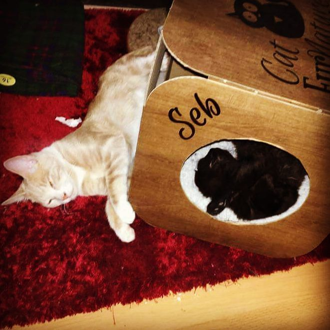 Haha it doesn't look like Seb minds that Bella is borrowing his pod   #cat #catsofinstagram #catstagram #catsagram #cats_of_instagram #catfurnature #catsinboxes #cattoy #INSTACAT_MEOWS #cutecat #PurrMachine #catsinboxes #catbox #Excellent_Cats #BestMeow #dailykittymail #thecatniptimes #frontpet #catcube #catpod #woodeffect #whiteandgold