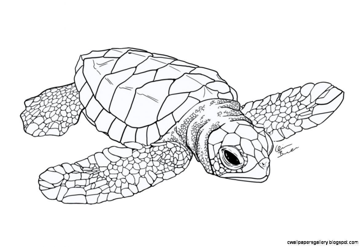 Pin By Kim Flados On Sea Life Sea Turtle Drawing Turtle Drawing Turtle Coloring Pages