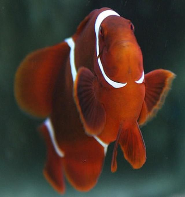 How To Set Up A Saltwater Aquarium In 10 Steps Pet Paradise Saltwater Aquarium Clown Fish