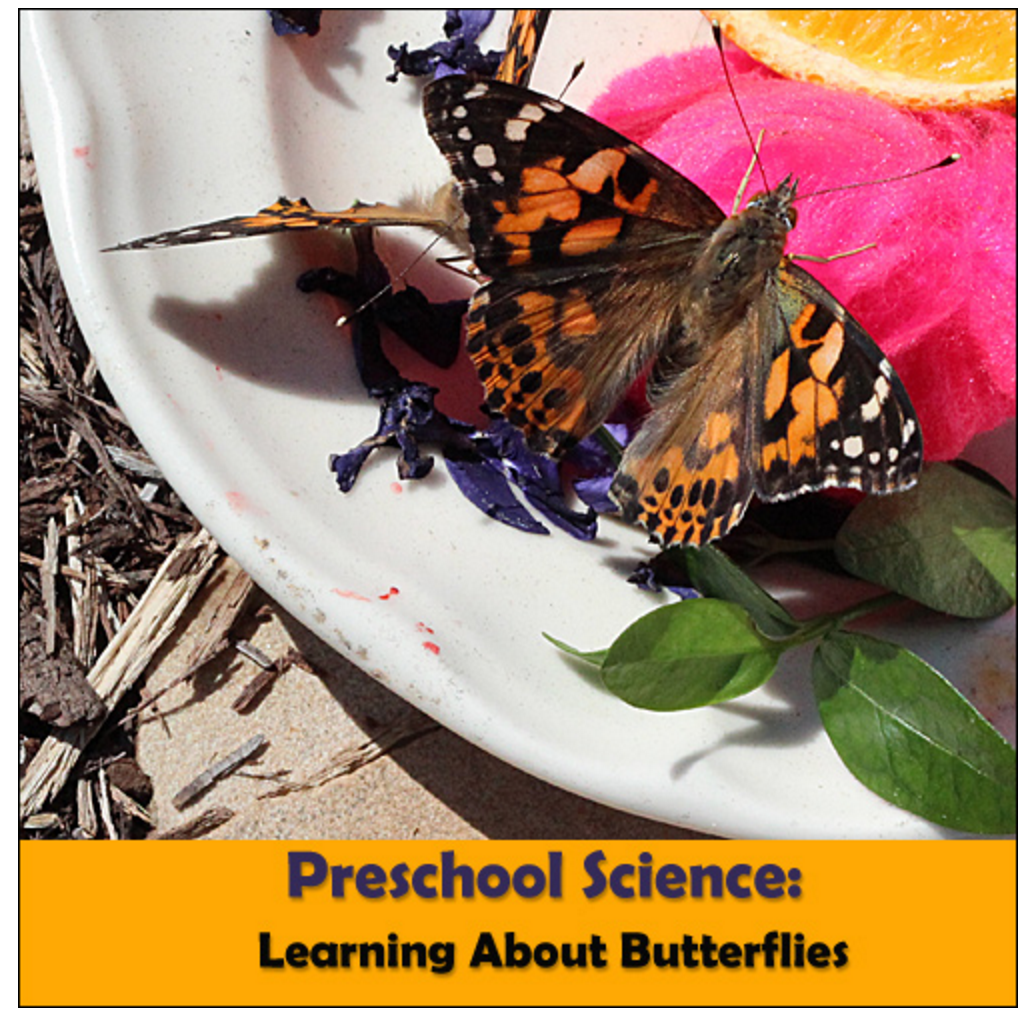 Preschool Butterfly Unit