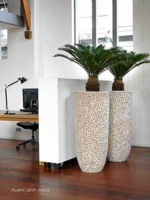 Duze Kwiaty Doniczkowe Do Nowoczesnych Wnetrz House Plants Decor Interior Plants Decoration Decor