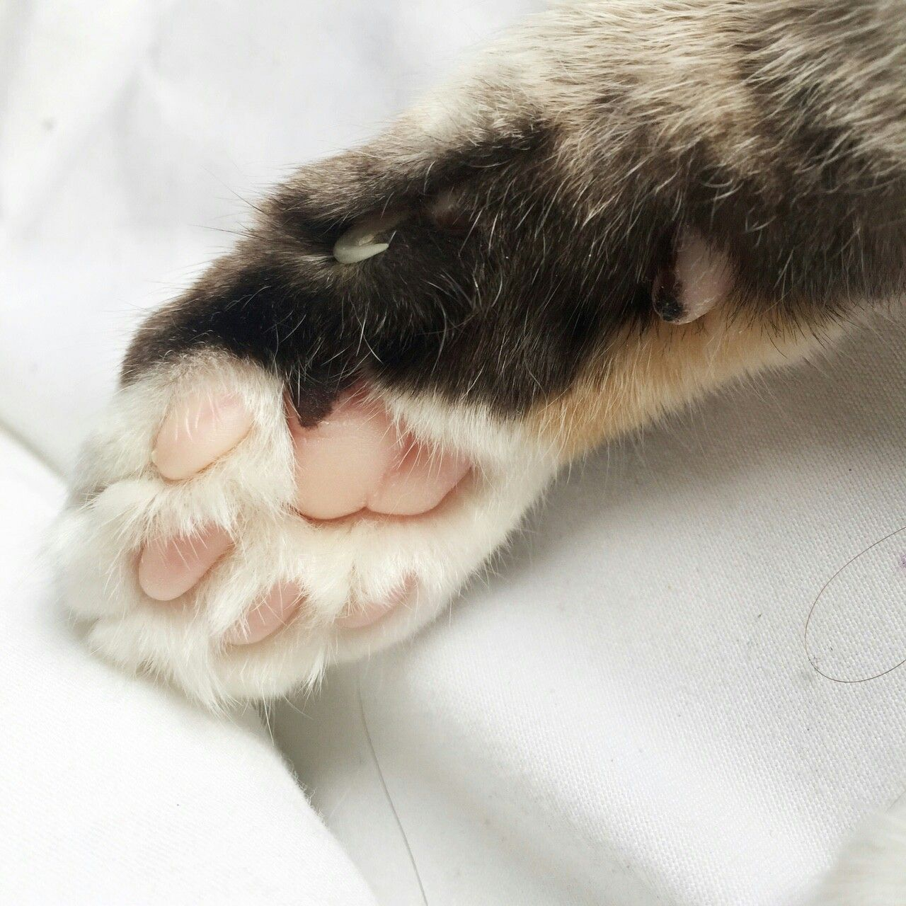 Pinterest Httpcelestial Cat Paws Cat Aesthetic Cat Photo