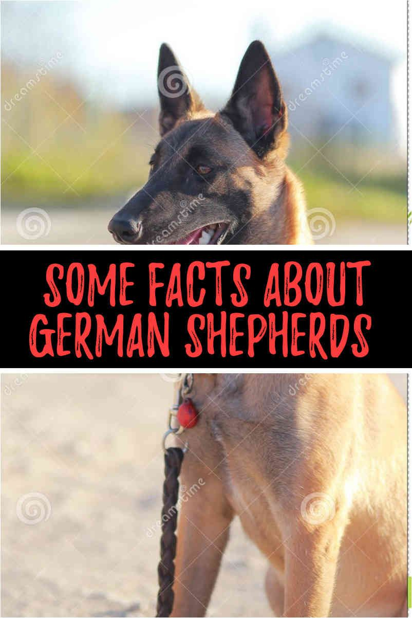 The Bundessieger Show Has Relationships On The German Dog Sport