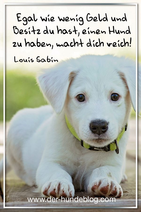 Photo of Great new sayings and quotes about and with dogs.  Look at the www.der-hund …