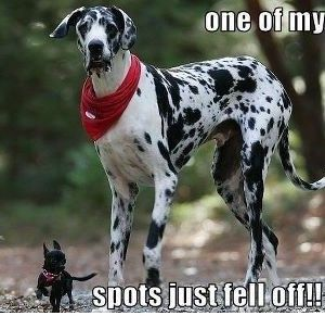 Funny Quotes About Spots Funny Dog Photos Funny Dogs Funny Animals