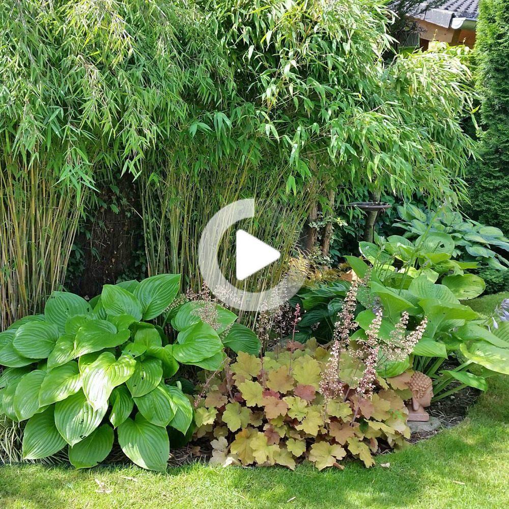 Bambus In 2020 Bambus Pflanzen Garten