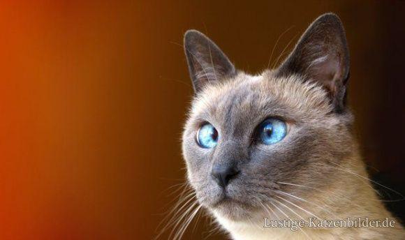 Lustige Katzenbilder und lustige Katzenfotos | lustige-katzenbilder | lustige_katzenbilder_bc176 ich liebe dieses Bild
