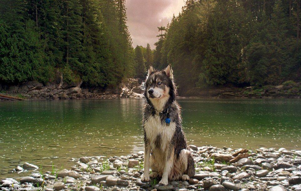 Goldilocks And The Wolf American Adventurer Reimagines Fairytale