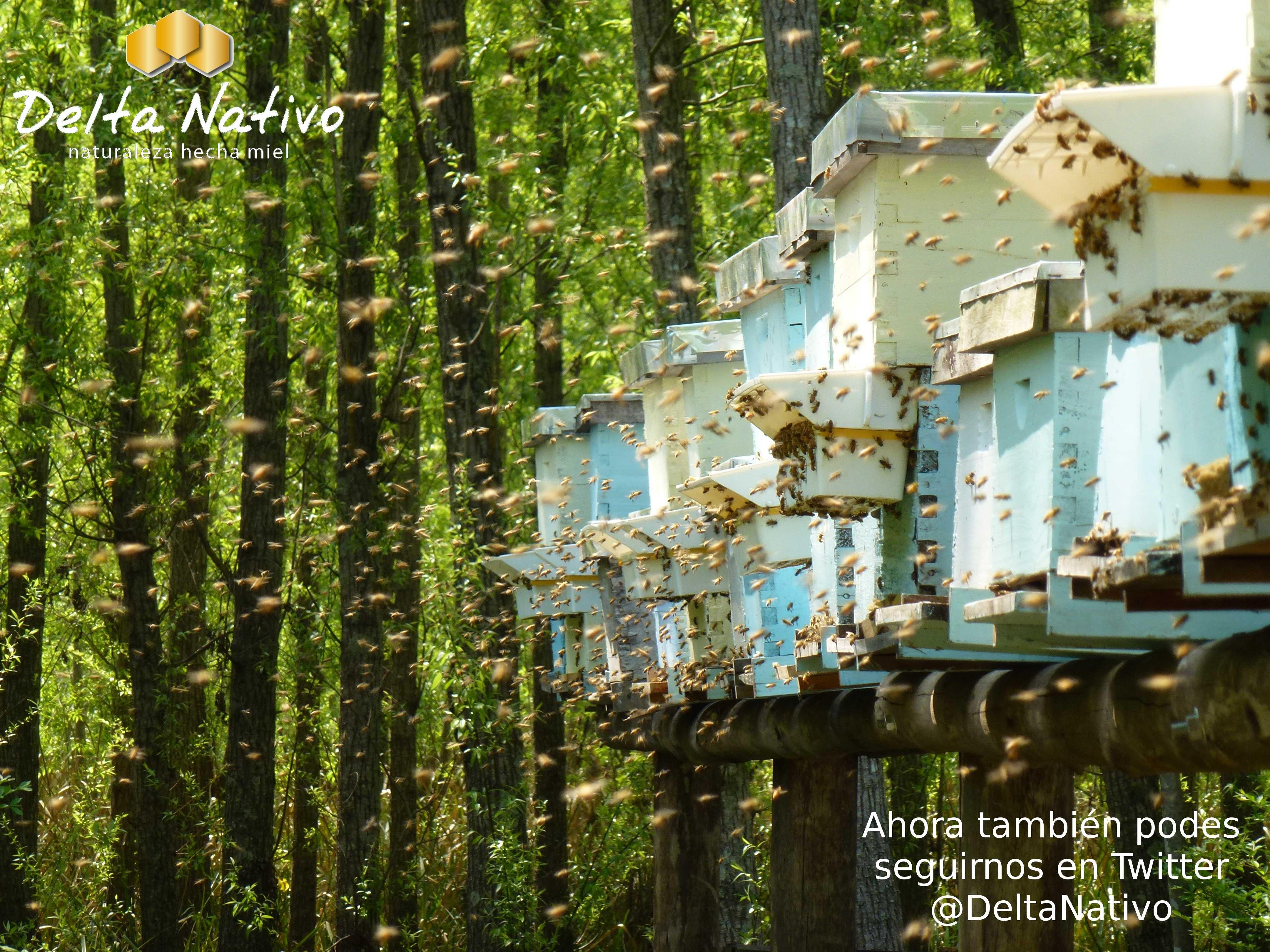 Colmenar en la segunda sección de islas del Delta del Paraná