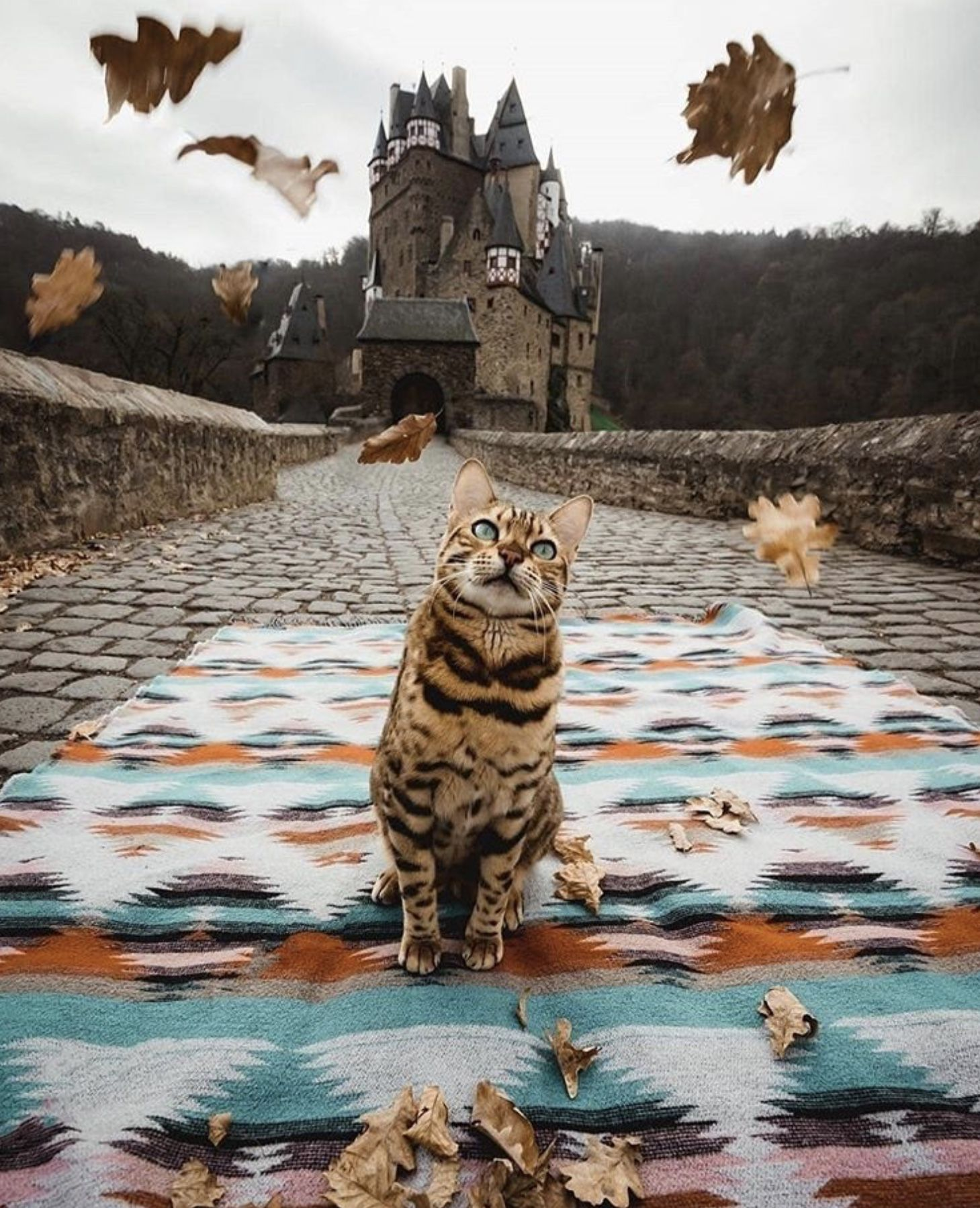 Pin by Ria Fisher on Cat Crazy in 2020 Adventure cat