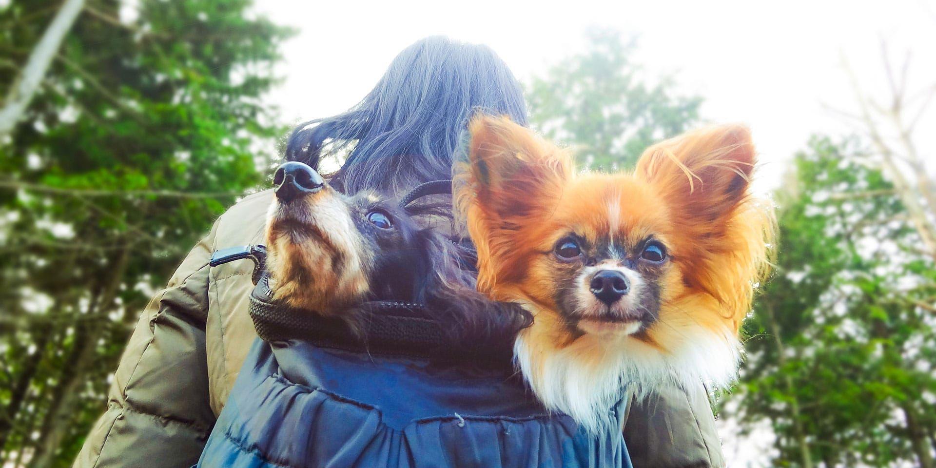 9380f2e8b742fb0ba2d327622ecc0bca - Better Homes And Gardens Pet Competition