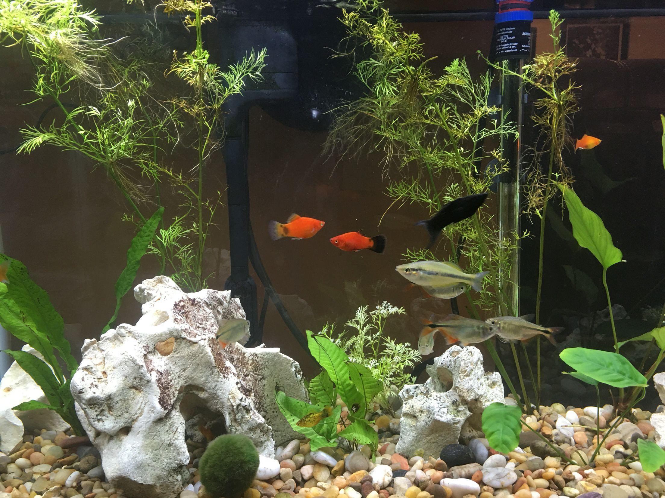 Freshwater aquarium fish massachusetts - Sprites