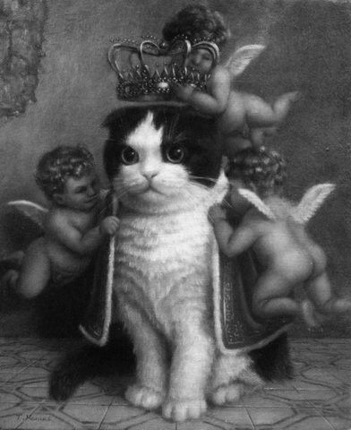 King of the kittens.