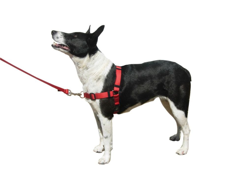 Front Lead No Pull Dog Harness made in USA #BeBopUSAPetSafetyProducts