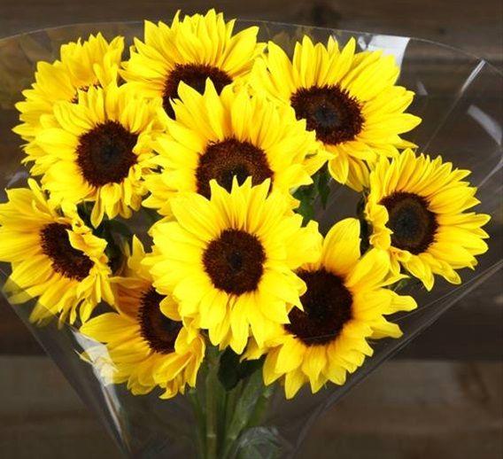 added by Chief Gringo | Mini sunflowers, Flowers, Sunflower