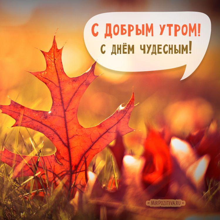 Осенние картинки с добрым утром: красивые и прикольные ...