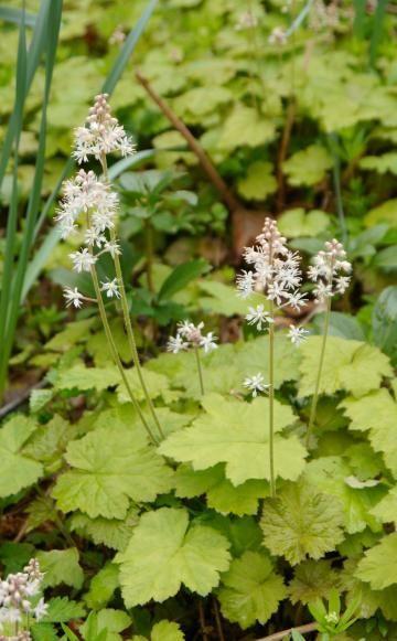 Immergrüne Pflanzen \u2013 Pflanzen, Pflege und Tipps - gartenpflanzen winterhart immergrun
