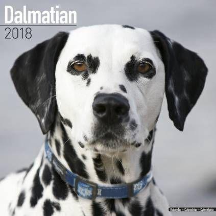 Avonside HundeKalender 2018 Avonside Hunde Wandkalender