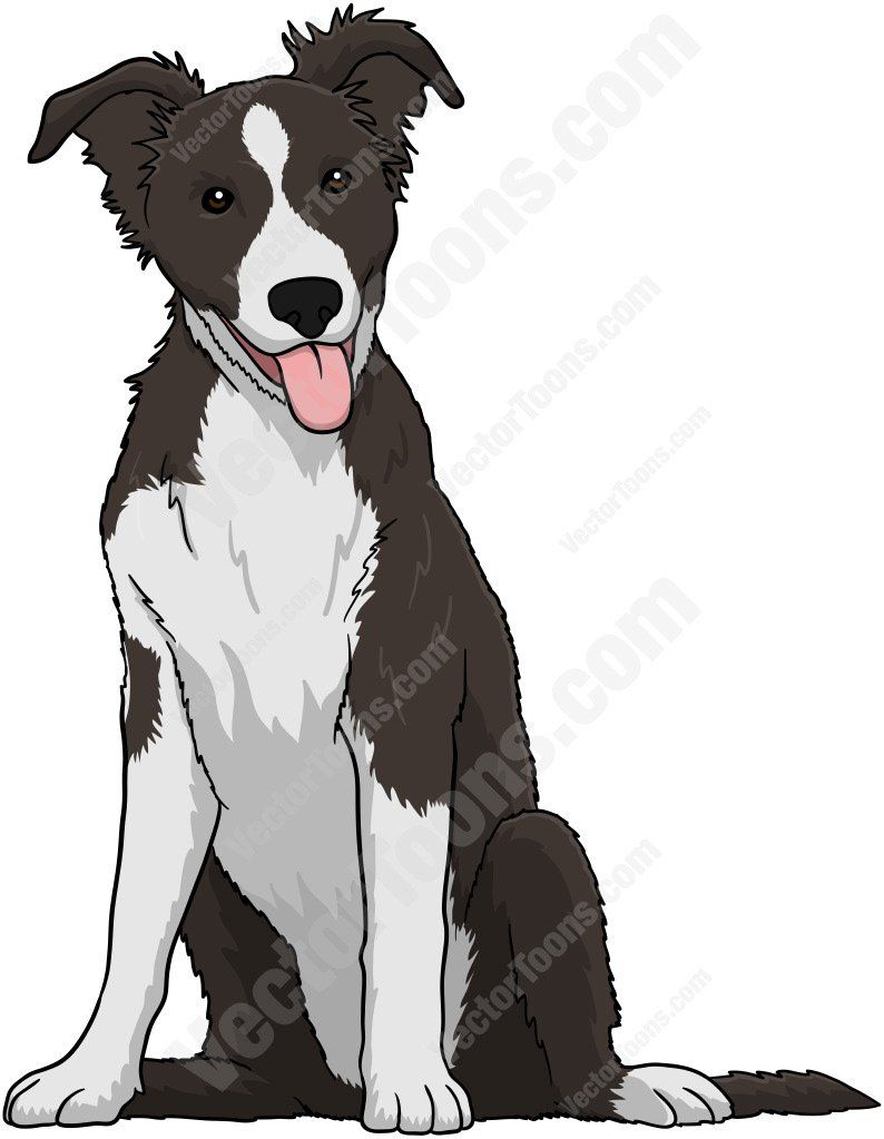 Black And White Border Collie Puppy Anime Puppy Cartoon Drawings