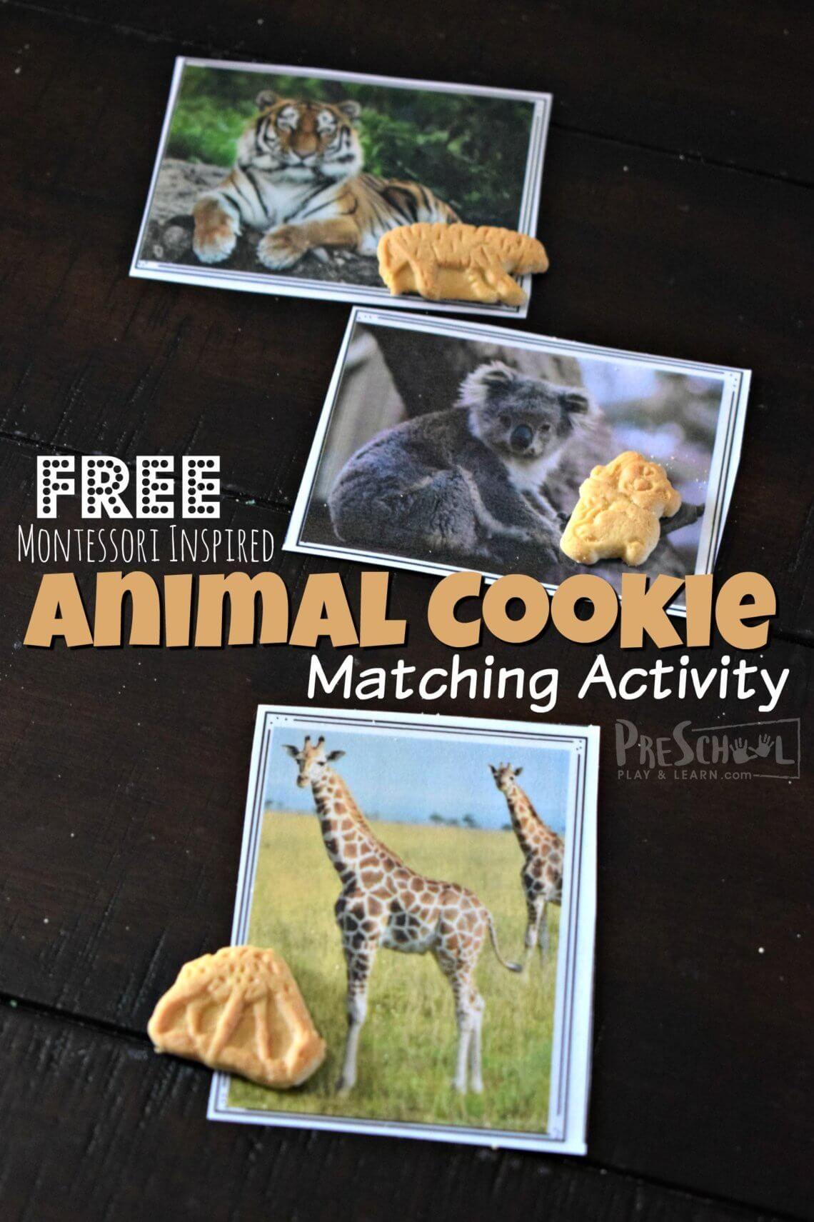 Free Montessori Inspired Animal Cookie Activity