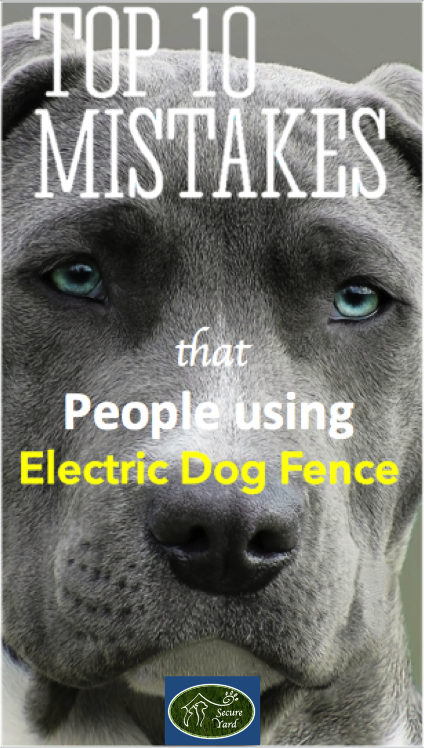 Top 10 Mistakes That People Make When Using Electric Dog Fences Or Electric Fence For Cats Dog Fence Pet Fence Wireless Dog Fence