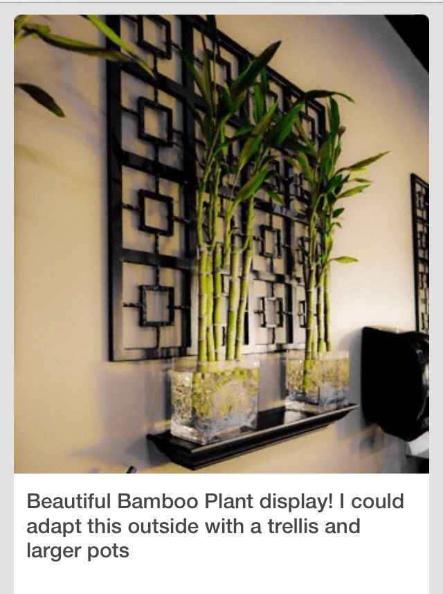 Bamboo | my apartment | Pinterest | Spa, Room and Room ideas on home office furniture design, modern zen garden design, japanese interior design, black and gold interior design, zen house design, hospital room interior design, concrete interior design, interiors by design,