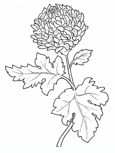 chrysanthemum flowers coloring pages - Chrysanthemum Book Coloring Pages