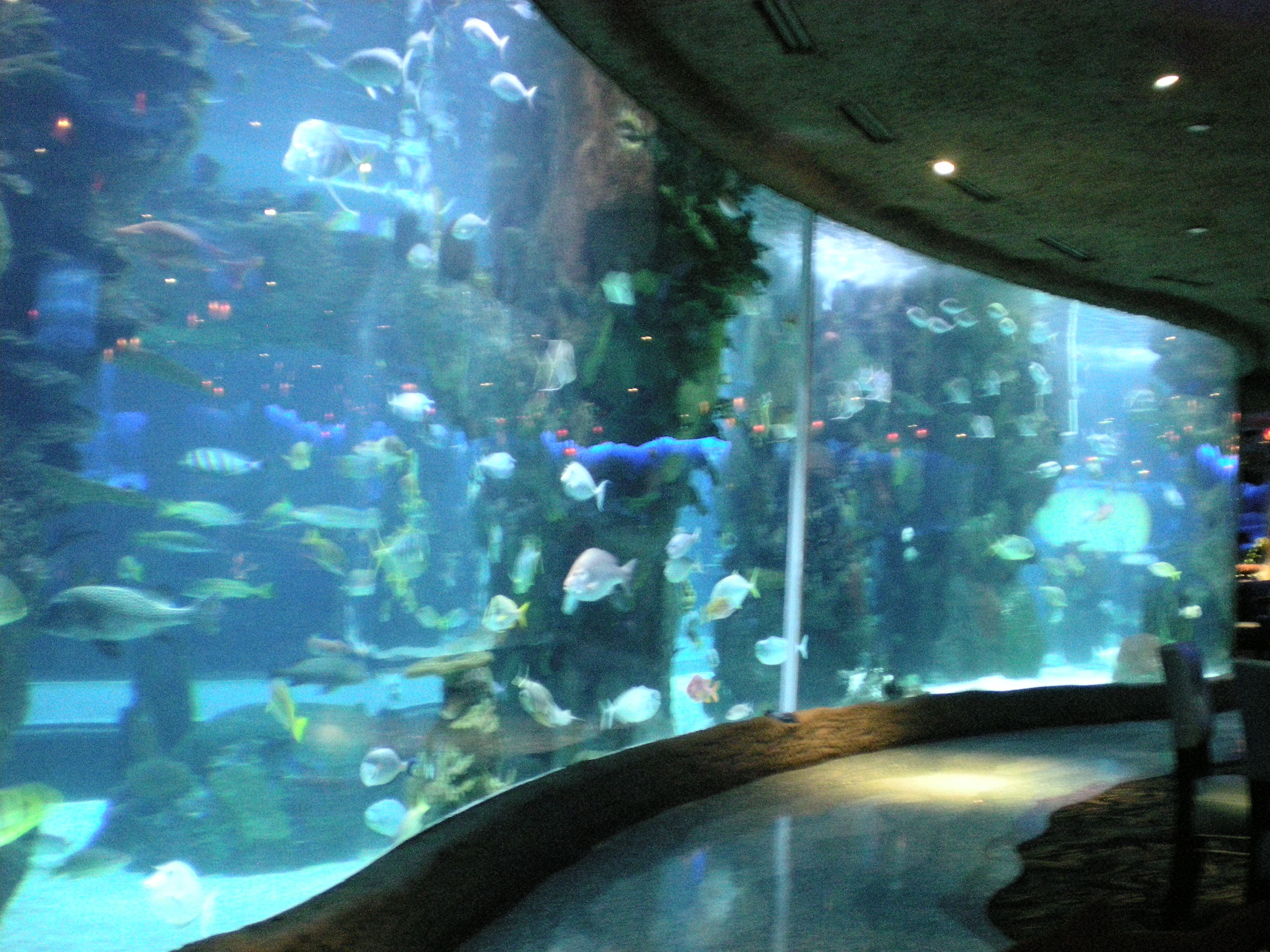 Aquarium Restaurant at Opry Mills, Nashville, TN ...