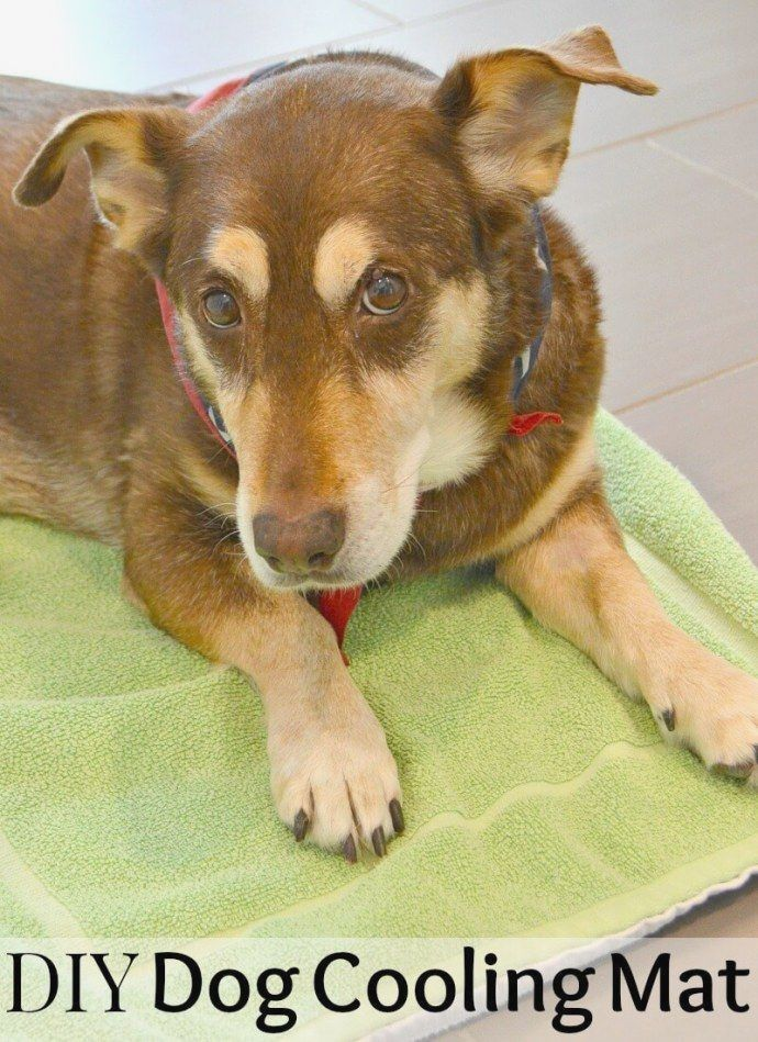 Pin By Ananenko Karl On Diy With Images Dog Cooling Mat Cool
