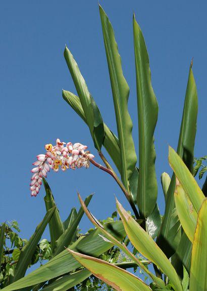 Pin On Tropical Garden