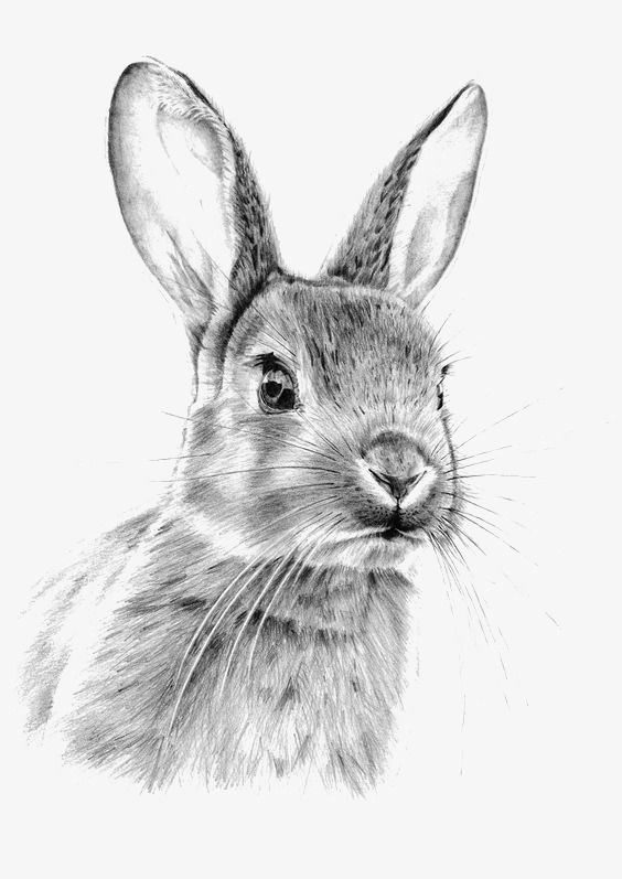 Sketch Rabbit