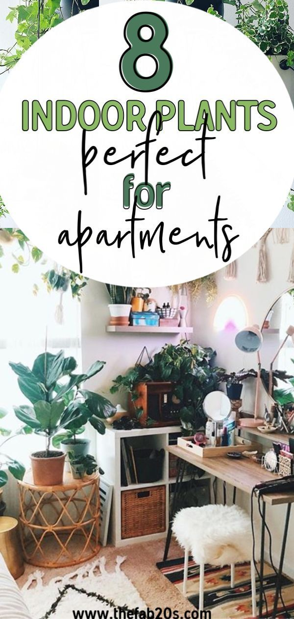 The most beautiful indoor plants perfect for apartments ...
