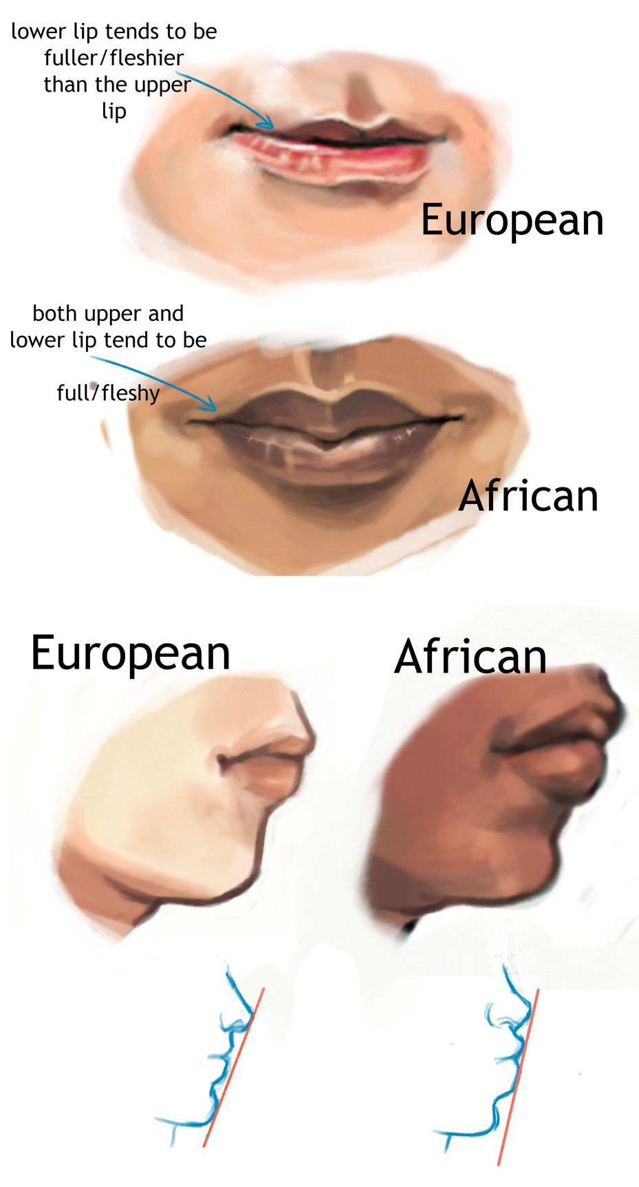 Artistic reference for depicting typical racial physical ...