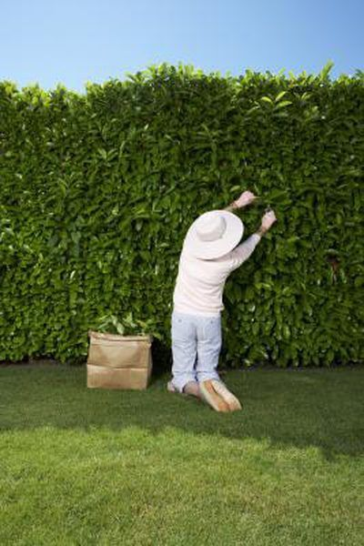 How to Use Shrubs & Hedges as Backyard Privacy Screens A tall fence is not your only option when creating a privacy barrier between you and a neighbor. Shrubs and hedges make excellent privacy screens as long as you don't have any pets or small children to keep inbounds. Lush evergreen bushes are the best choice when forming a natural privacy screen since they stay ... to Use Shrubs & Hedges as Backyard Privacy Screens A tall fence is not your only option when creating a privacy barrier between you and a neighbor. Shrubs and hedges make excellent privacy screens as long as you don't have any pets or small children to keep inbounds. Lush evergreen bushes are the best choice when forming a natural privacy screen since t