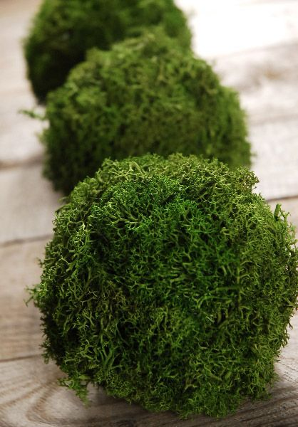 10 Ways To Decorate With Green Moss: Types Of Christmas Trees, Flower Ball, Moss Grass