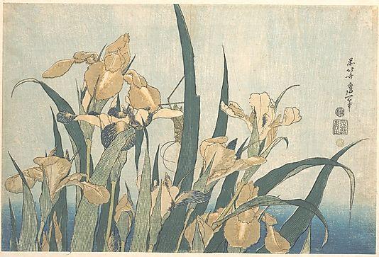 Katsushika Hokusai (Japanese, 1760–1849). Grasshopper and Iris, late 1820s. Japan. The Metropolitan Museum of Art, New York. The Francis Lathrop Collection, Purchase, Frederick C. Hewitt Fund, 1911 (JP747) #iris #flower
