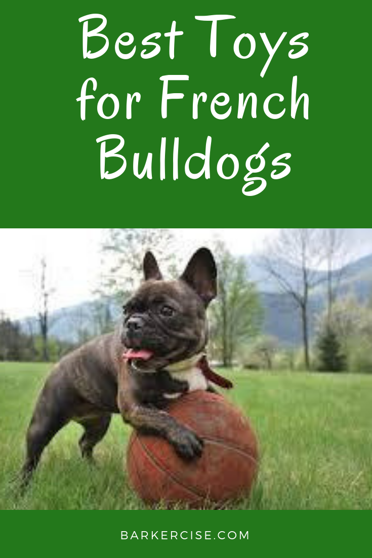 Best Toys For French Bulldogs French Bulldog Bulldog Puppies Toy French Bulldog
