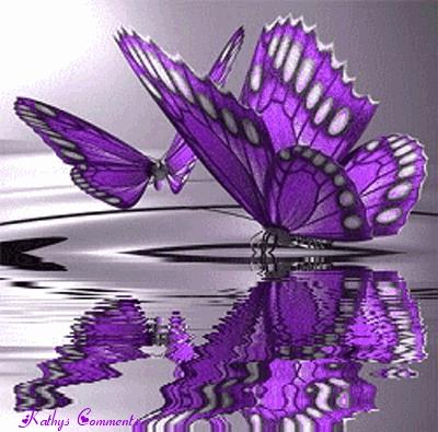 pretty butterfly.