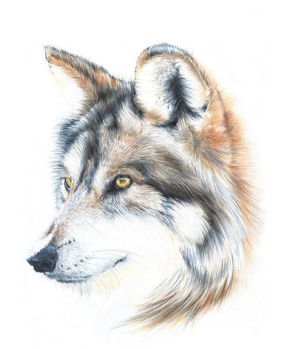 Wolf drawing wolf illustration animal art by nayanailiffe pencil and pan pastels