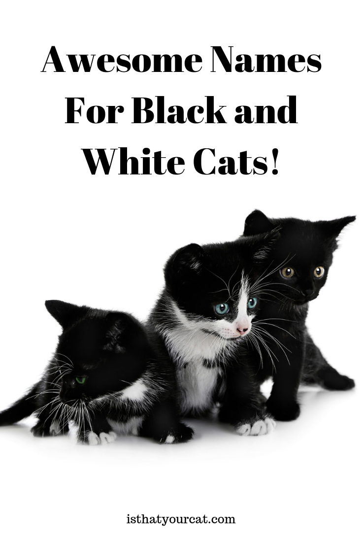 Naming A Cat Can Be Something That Clicks In An Instant Or It Can Take Some Thinking We Hope You Find The Ju Black And White Kittens White Cats Kitten Names