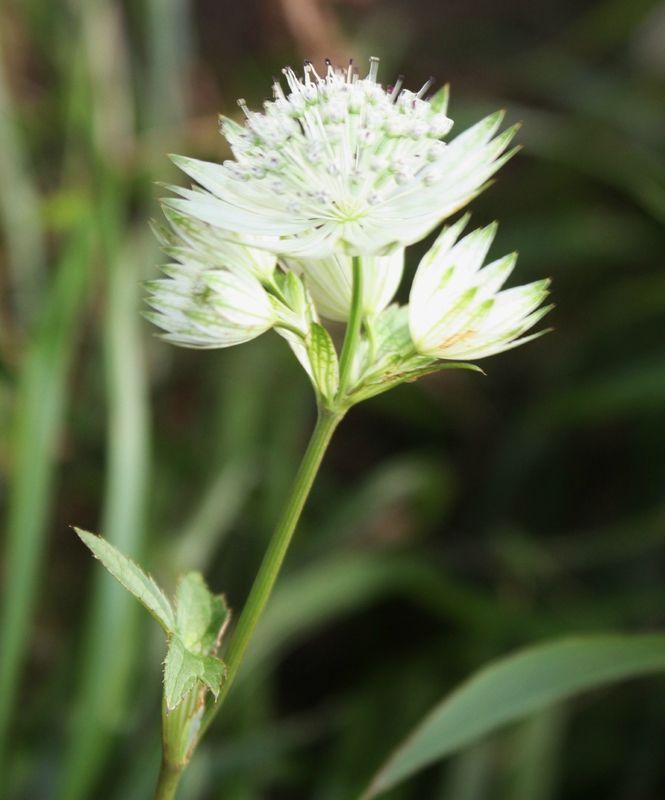 Épinglé par LesPetitsClics sur Flower power / flowers ...