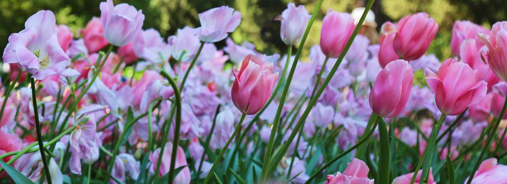 #SpringBlossom