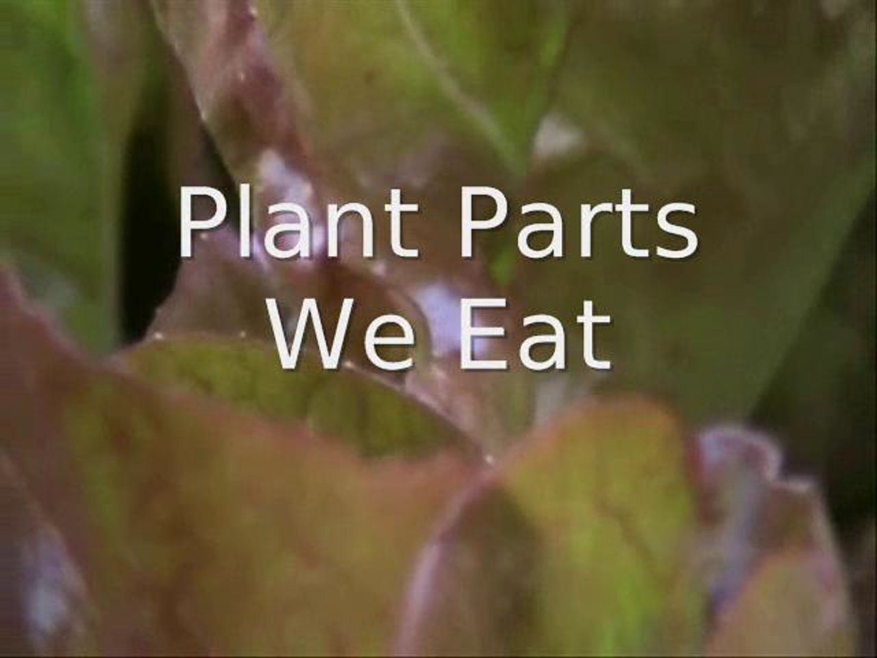 This Is Plant Parts We Eat By Kstatehe On Vimeo The