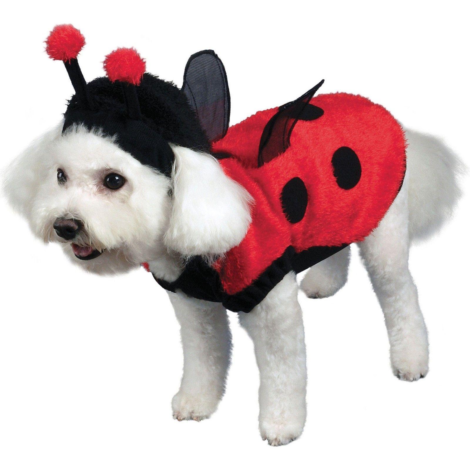 Lovely Ladybug Dog Costume | 10 Halloween Pet Costumes ...