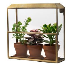 Modern Sprout  | Growhouse | Goop - Goop Shop
