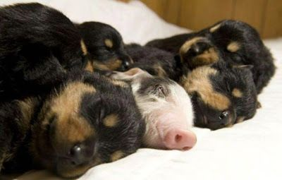 Birth of a New Earth: ANIMAL ABUSE AND THE TRUTH ABOUT BACON