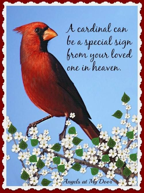 Cardinalfrom Angels at My Door on Facebook Missing Your