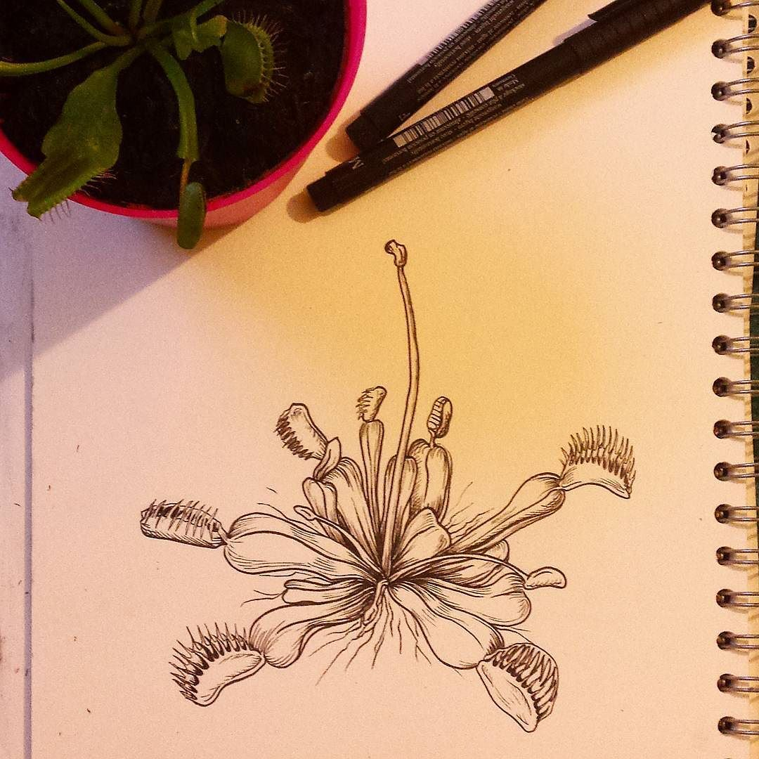 A venus fly trap featuring Neptune one of my fly traps. #drawing ...